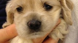 puppy-877664_640