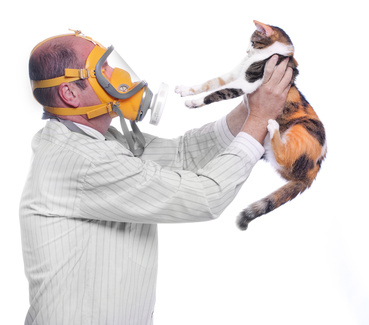 Allergy to animal fur concept. Man in respirator holding his cat.