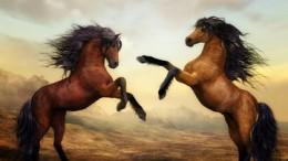 PferdeFaszination