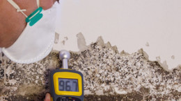 Pest controler gauges a mold infestation