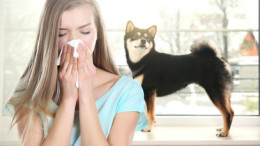Young ill woman with tissue and pet on background. Concept of allergies to dogs