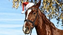 horse-3665213_1280