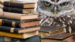 owl-2670138_1280