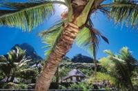 Fiji_Palme_Haus_200