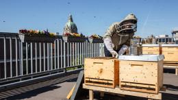 Imkerin am Bienenstock auf Dachterrasse