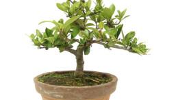 hochzeitsbaum-gardenia_1