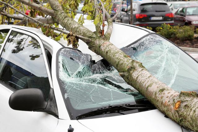 Durch umgestuerzten Baum beschaedigtes Auto