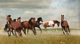 DiePferdeSindLos