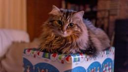 cat-1089144_1280