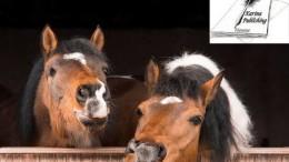 PferdebuecherKarinaVerlag