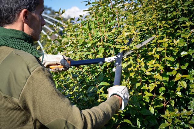 Gärtner mit Schere an einer Hecke - D.A.S. Verbraucherfrage der Woche
