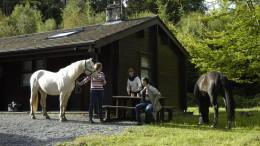 ferienhaus mit pferden, an sibin riding center, irland
