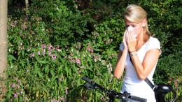 Maedchen schaeuzt sich vor Blumen die Nase