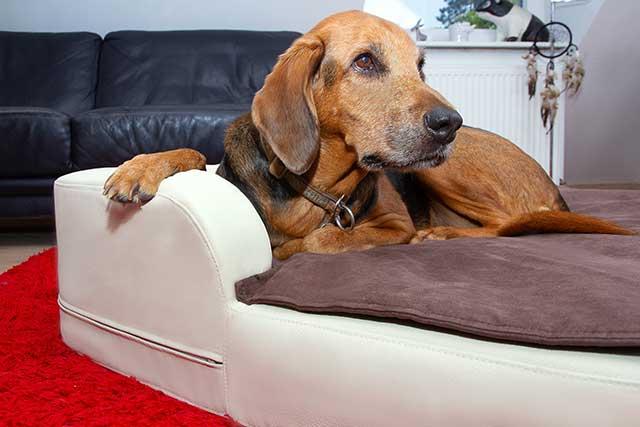 xxlhundebetten für hunde bis 100kg  news8de