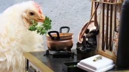 chicken-5240005_1280