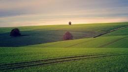 fields-3799279_640